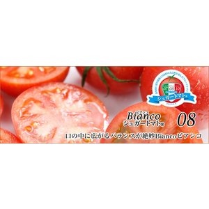 高知県 高糖度フルーツトマト シュガートマトビアンコ糖度8(1kg) 20玉入 約50g/玉|3chokud|02