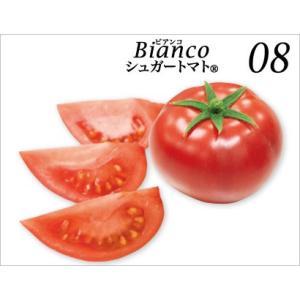 高知県 高糖度フルーツトマト シュガートマトビアンコ糖度8(1kg) 20玉入 約50g/玉|3chokud|03