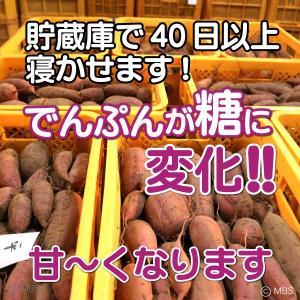 大分県 さつまいも 甘太くん 5kg(M) 20〜33本入|3chokud|03