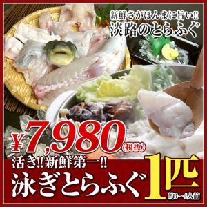 淡路島 とらふぐ 約1キロ 1匹 ふぐちり 3...の関連商品1