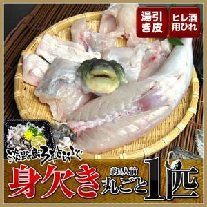 3年とらふぐ 丸ごと1匹身欠き(元魚1.3kg:大きくなりました )鍋5人前 淡路島3年とらふぐ 若男水産|3nen-torafugu