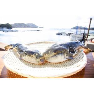 梅コース ふぐ鍋 セット(3-4人前) 淡路島3年とらふぐ 若男水産|3nen-torafugu|05