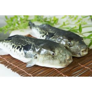 絶品 淡路島産 とらふぐ 唐揚げ 約200g 若男水産|3nen-torafugu|05