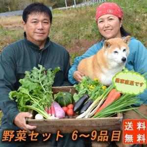 送料無料!『農家直送!南房総の豊かな土壌で育った野菜セット(6〜9品目)』