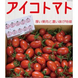 【送料無料】アイコトマト3Kg【長崎県産】やまちゃんのアイコとまと|4132mall|02