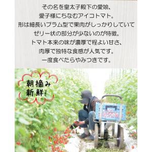 【送料無料】アイコトマト3Kg【長崎県産】やまちゃんのアイコとまと|4132mall|03
