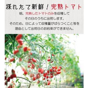 【送料無料】アイコトマト3Kg【長崎県産】やまちゃんのアイコとまと|4132mall|04