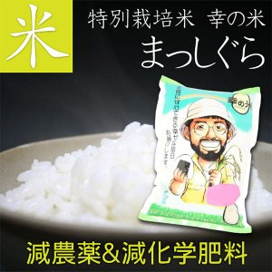 【送料無料】特別栽培米(減農薬&減化学肥料) まっしぐら 10kg 贈り物 ギフト お礼 お返し プレゼント お米 ごはん 玄米 胚芽米 白米 新米|4kijp