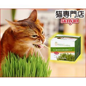 猫草 エイムクリエイツ 犬と猫が好きな草 栽培セット ペット...