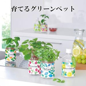 ペットボトル型の底面給水栽培セット「グリーンペット」。 土を使わない水耕栽培で、お部屋の中で、簡単&...