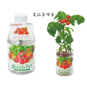『栽培セット』 育てるグリーンペットベジ 【即...の詳細画像1