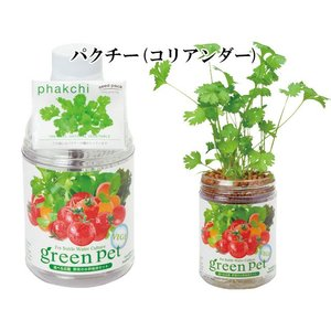 『栽培セット』 育てるグリーンペットベジ 【即...の詳細画像3
