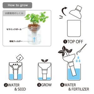 『栽培セット』 育てるグリーンペットベジ 【即...の詳細画像4