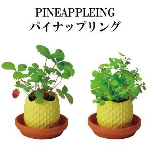 栽培キット PINEAPPLEING パイナップリング 「即納」 栽培セット 植物 グリーン ハーブ...