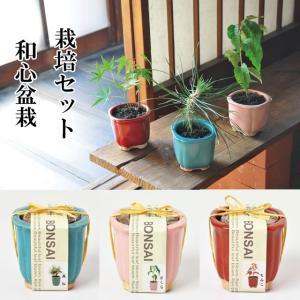 『栽培セット』 和心盆栽栽培セット 「即納」 ...の関連商品1