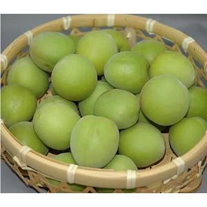 梅生産量日本一を誇る和歌山県を代表する品種であり、梅のトップブランドです 配送は6月上旬〜6月中旬頃...