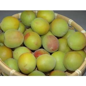 梅生産量日本一を誇る和歌山県を代表する品種であり、梅のトップブランドです 配送は6月中旬〜7月上旬頃...