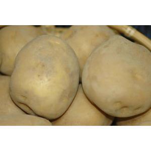 <7%OFFクーポン対象>静岡産 三方原馬鈴薯 男爵 500g  2〜3個入 大玉秀品 L〜2Lサイズ じゃがいも ジャガイモ...
