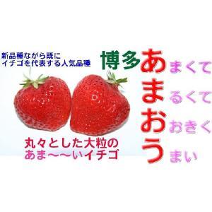 12月以降分予約 訳あり 福岡産 あまおう 苺 Gパック 2パック いちご イチゴ S10
