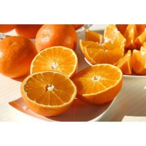 『あいか』は、正式名称「愛媛果試験28号」で、TVでも話題の人気高級柑橘 紅まどんな と同じ品種とな...