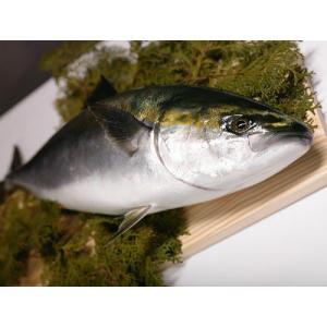 長島の豊かな海で育てられた脂がのったブリを、新鮮なまま届けます。 歯ごたえのある新鮮なぶりをご賞味く...