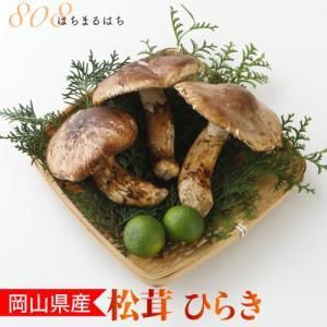 2021年分予約 国産 松茸 ひらき 小さめ 約230g 2〜8本程度 まつたけ マツタケ 岡山 S...