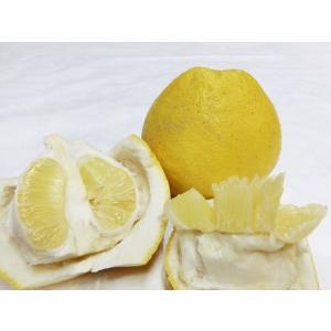 パール柑は文旦の一種で表面が滑らかなのが特徴です。 熊本県では「パール柑」、鹿児島県では「サワーポメ...