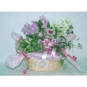 デンドロビュームアレンジS (寄鉢)(受注作成)|8hana-gift