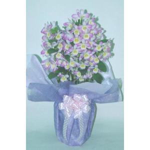 デンドロビューム 紫のふち 5号(店舗共有)|8hana-gift