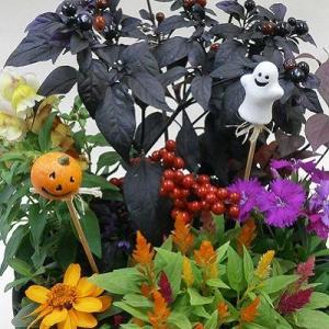 ハロウィンの寄植え2980  プラ鉢に植え込んで植替え不要でかわいい寄せ植え|8hana-gift