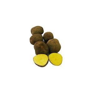 インカのめざめ 春作ジャガイモ種芋 500g
