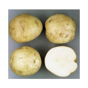 男爵(馬鈴薯)春作 ジャガイモ種芋 10kg...