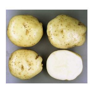 ワセシロ(早生白) 1kg 春作ジャガイモ種芋...