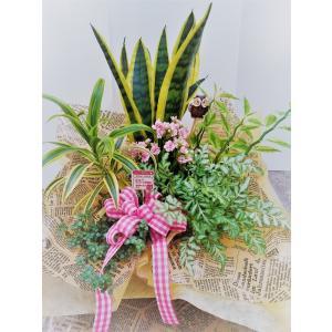 観葉植物 サンセベリアの寄せ鉢アレンジ|8hana-gift