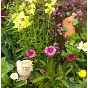 季節の花の寄植え1980  プラ鉢に植え込んで植替え不要でかわいい寄せ植え