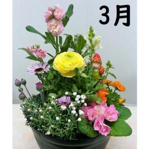 季節の花の寄植え2980  プラ鉢に植え込んで植替え不要でかわいい寄せ植え|8hana-gift