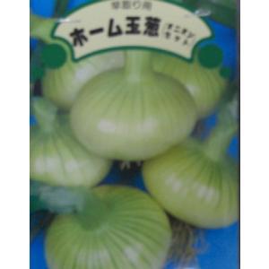 ホーム玉葱 球根 20個から26個 170g (充填時)|8hana-gift