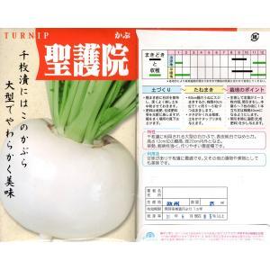 野菜の種 かぶ 聖護院大蕪 25ml|8hana-gift
