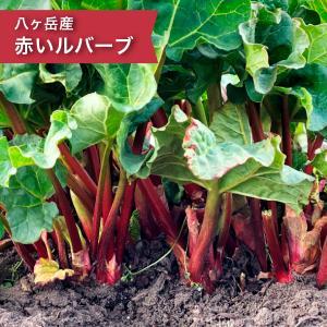 赤いルバーブ 1kg 食用 加工用 長野県 八ヶ岳 南アルプスの麓 富士見町 アビエスファーム  2...