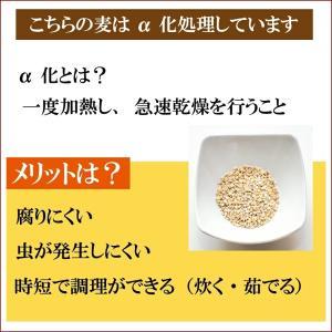 新麦 令和元年産 もっちもち大麦 1.5kg(500g×3袋)国産 ポイント消化 送料無料 500 食品 米 雑穀 お試し 大麦 メール便 岡山県産 訳あり メール便|9461534|04