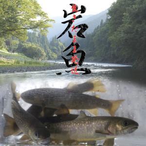 【産地直送】生きたまま発送!川魚の女王岩魚(イワナ/いわな)鮮魚《養殖》塩焼きに最適【おためしの10匹】 送料無料|a-k-k
