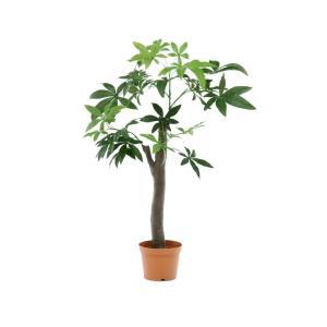 観葉植物 パキラ 朴の木タイプ 52665