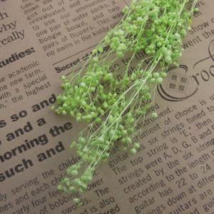 【ハーバリウム用ドライフラワー】ソフトミニかすみ草(ミントグリーン) JY-075-3[S00010-720]