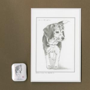 バッジ&ポストカード(はなふさ あんに) NO,156|abcdogs