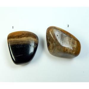 ペトリファイドウッドタンブル'最も高いレベルへのトランスフォーメーションの石'petri022 有名な トラスト