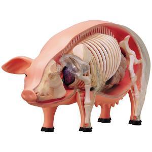 豚 解剖 人形 模型 おもちゃ キット 透明 クリア フィギュア 動物 サイエンストイ 知育玩具 理科 生物 自由研究 学習 英語 海外 教材 acomes