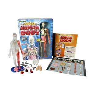 人体模型 おもちゃ 解剖学 理科 勉強 英語 学習|acomes