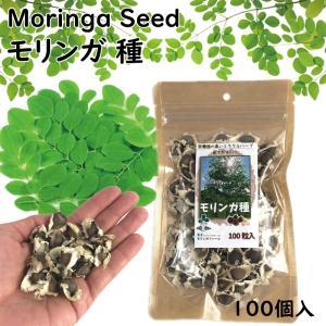 天草モリンガ モリンガシード モリンガの種100粒 天然ハーブ MORINNGA 植えてもOK食べてもOK 栄養価の高いミラクルハーブ|advanceworks2008