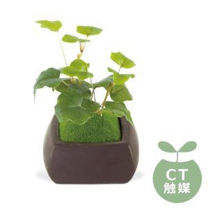 (送料無料)Wa Bonsai(和盆栽) DEODORANT ARTIFICIAL GREEN 消臭アーティフィシャルグリーン オオバコ KH-61064|advanceworks2008
