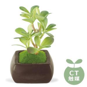 (送料無料)Wa Bonsai(和盆栽) DEODORANT ARTIFICIAL GREEN 消臭アーティフィシャルグリーン カネノナルキ KH-61065|advanceworks2008